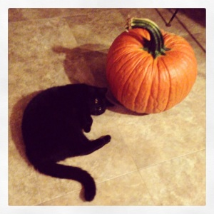 Typical black cat behavior, curling up near and around decorative gourds.
