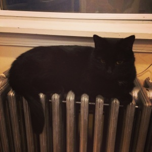In the cold of winter in the Little Italy house, Sushi slept happily on the radiators.