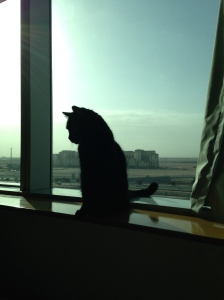 Sushi surveying his new home in the Middle East.