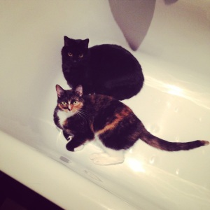 Shortly after Sushi was diagnosed with cancer, he took to sleeping in the bathtub, inexplicably, and I stumbled upon this romantic scene one night when I came in to use the bathroom.