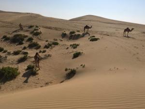 camels_dunes
