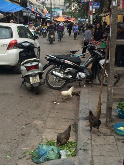 Chickens and motorbikes.