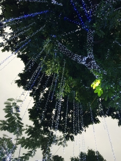 Around Hoan Kiem Lake in the middle of Hanoi, trees are draped with lights in anticipation of Tet.